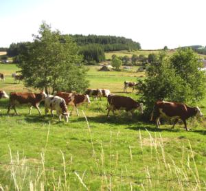 Présence dans le monde rural